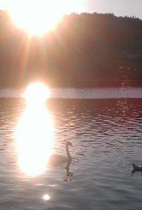 Lily Dale sun set